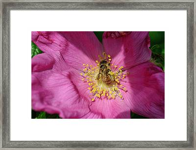 Happy As Can Bee Framed Print by David Rucker