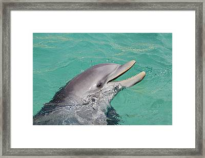 Happy Atlantic Bottlenose Dolphin Framed Print by Dave Fleetham