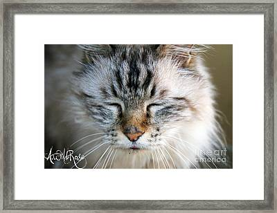 Happy Framed Print by Awildrose Photography