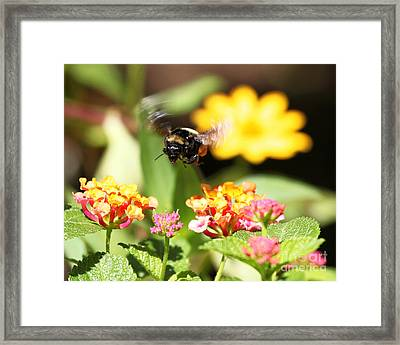 Framed Print featuring the photograph Happy Bee by Luana K Perez