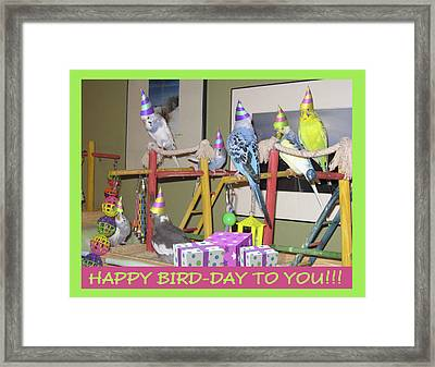 Happy Bird-day Framed Print by Kimberly Mackowski