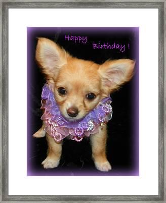 Happy Birthday Chihuahua Framed Print by Sheri McLeroy