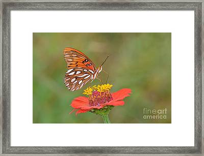 Happy Birthday Judy  Framed Print by Kathy Gibbons