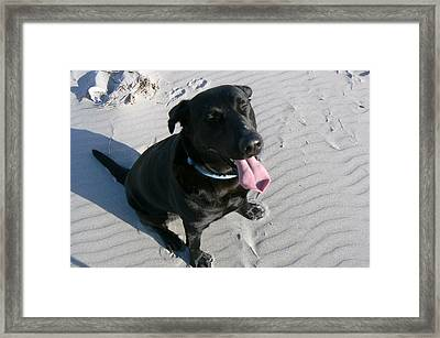 Framed Print featuring the photograph Happy Dog by Pamela Patch