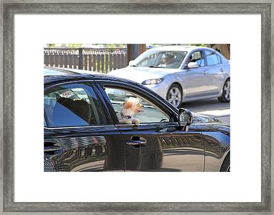 Happy Dog Framed Print by Valentino Visentini