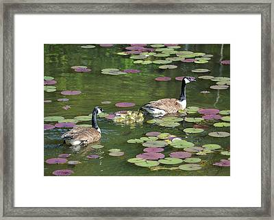 Happy Family Framed Print by Mary Zeman