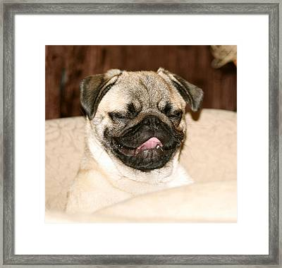 Happy Go Lucky Noodle Framed Print by Veronica Ventress
