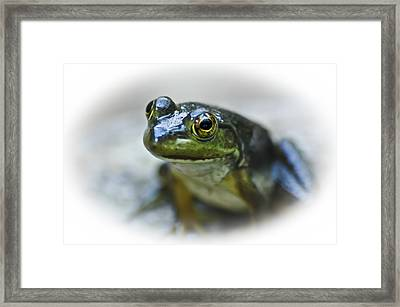 Happy Green Frog Framed Print by Carolyn Marshall