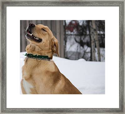 Happy Happy Doggie Framed Print