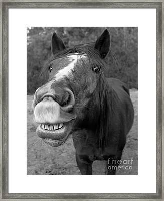 Happy Horse Framed Print by Christean Ramage