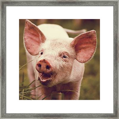 Happy Little Piglet Framed Print by Liesel Conrad