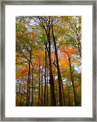 Happy Orange Framed Print by Ed Smith