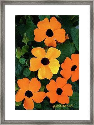 Happy Orange Framed Print by Ruth Bodycott