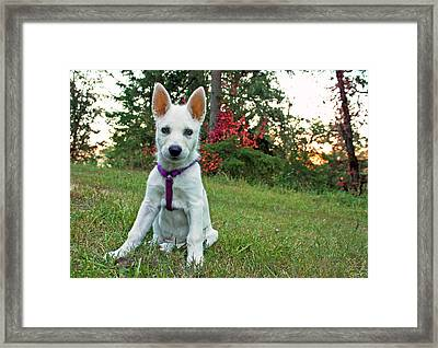 Happy Puppy Framed Print by Tyra  OBryant