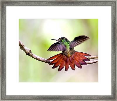 Happy Framed Print by Susi Stroud