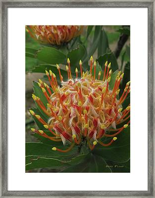 Happy Whatever Card Framed Print by Michael Flood