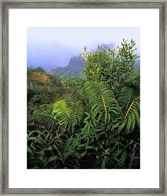 Hapu'u Ferns Framed Print