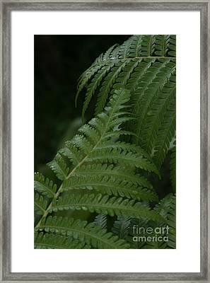 Hapuu Pulu Hawaiian Tree Fern - Cibotium Splendens Framed Print