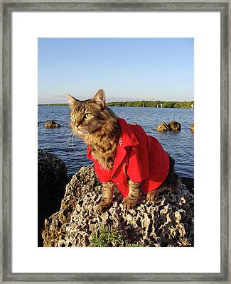 Harbor Master Framed Print by Joann Biondi