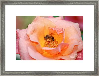 Framed Print featuring the photograph Hard At Work by Kathy Gibbons