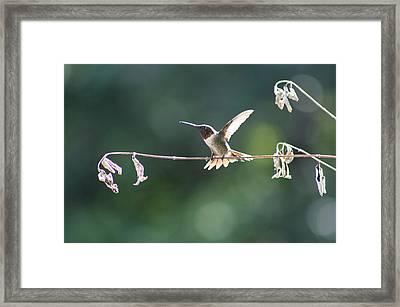 Hard To Be Still  Framed Print by Victoria  Kurlinski