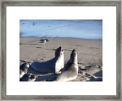 Framed Print featuring the photograph Harmony by Christine Drake