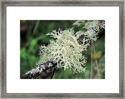 Framed Print featuring the photograph Harmony by I'ina Van Lawick