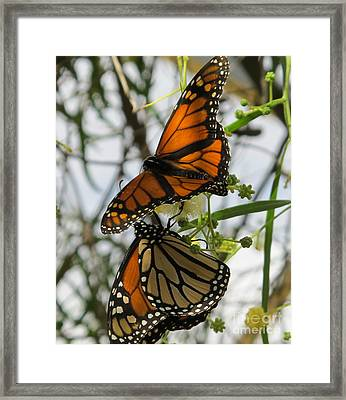 Framed Print featuring the photograph Harmony by Leslie Hunziker