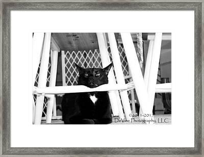 Harry One Twisted Cat Framed Print by Stephani JeauxDeVine