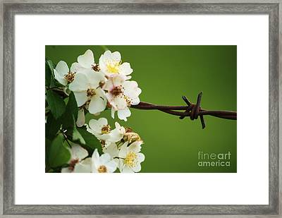 Harsh Vs Soft Framed Print