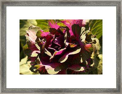 Harvest Framed Print by Margaret Steinmeyer