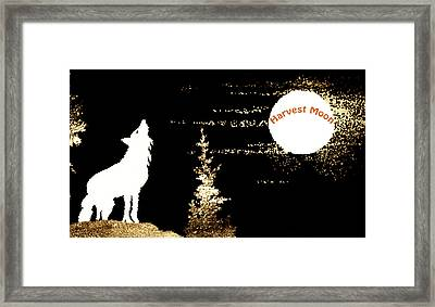 Harvest Moon Coyote 1 Framed Print