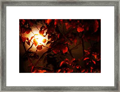 Harvest Moon Framed Print by Heidi Smith
