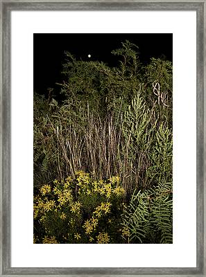 Harvest Moon Over Texas Plains Framed Print by Melany Sarafis