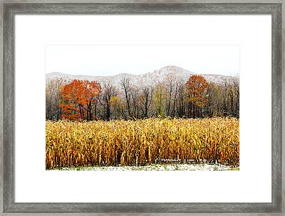 Harvest Snow Framed Print by Carolyn Postelwait