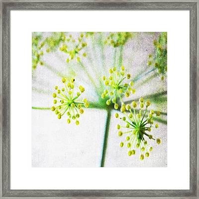 Harvest Starburst 1 Framed Print