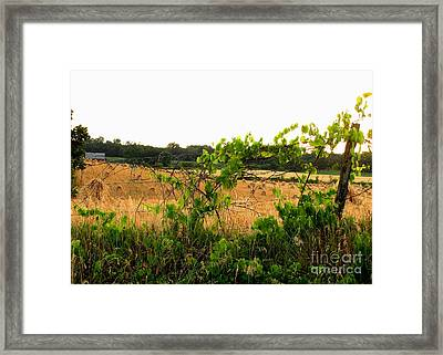 Harvest Time Framed Print by Marilyn Smith