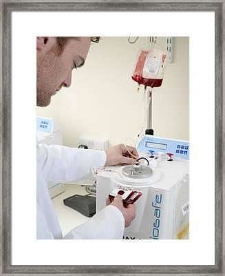 Harvesting Cord Blood Stem Cells Framed Print by Tek Image