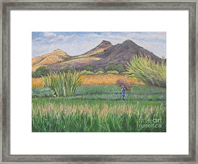 Harvesting In Yagul Framed Print by Judith Zur