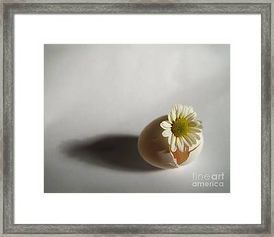 Hatching Flower Photograph Framed Print
