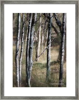 Framed Print featuring the photograph Haunt Of The Fringe Dwellers by Vicki Ferrari
