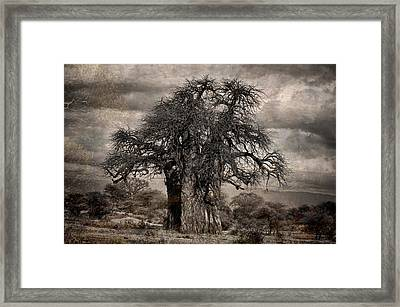 Haunted African Baobabs Tree Framed Print by Jess Easter