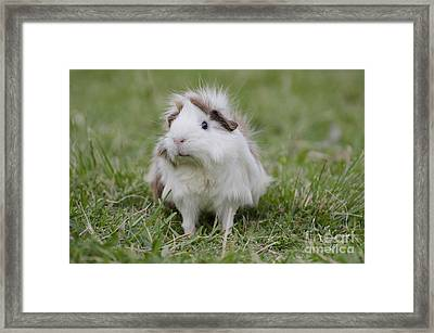 Have You Seen My Hairspray? Framed Print