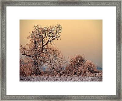 Frost 2 Framed Print by Linsey Williams