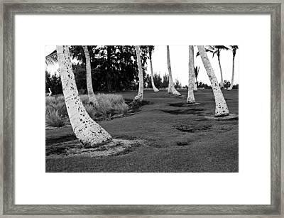 Hawaii Palms Framed Print