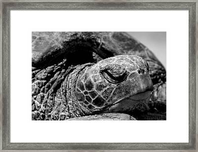 Hawaiian Basking Turtle Framed Print by Elizabeth  Doran
