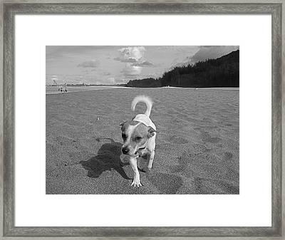 Hawaiian Beach Dog Framed Print