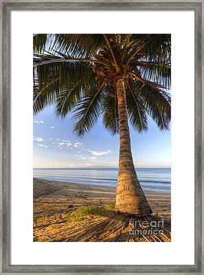 Hawaiian Coconut Palm Sunrise Framed Print