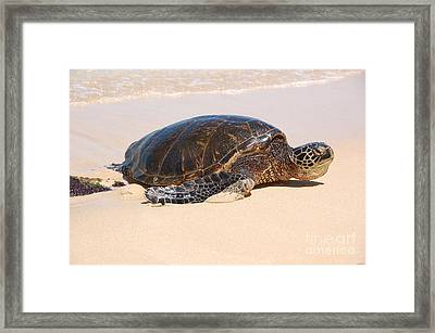 Hawaiian Honu Framed Print