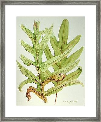 Hawaiian Lauae Ferns Framed Print by Vincent Callagher